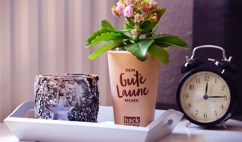 Die Blume im Kaffeebecher als Zimmerdekoration verwendet. Super DIY Geschenk!