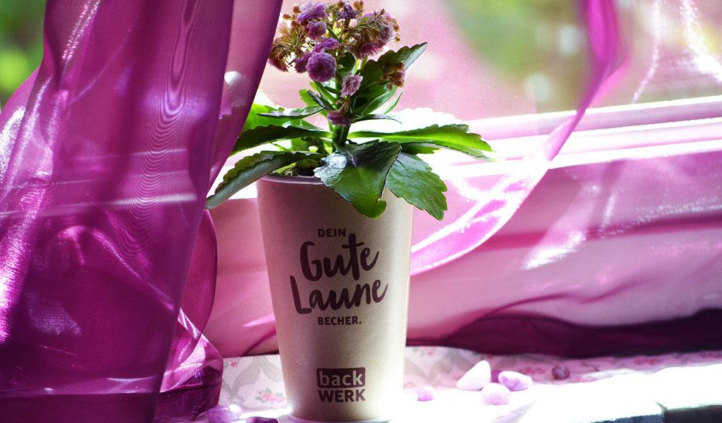 Eine Kaffeebecher, in den eine Blume gepflanzt wurde.