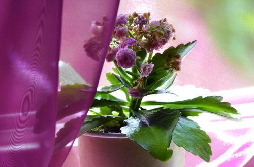DIY Geschenk: Pflanze in Kaffeebecher gepflanzt