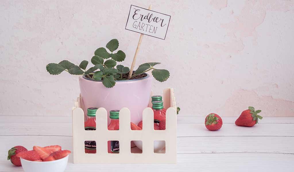 Erdbeergarten to go verschenken
