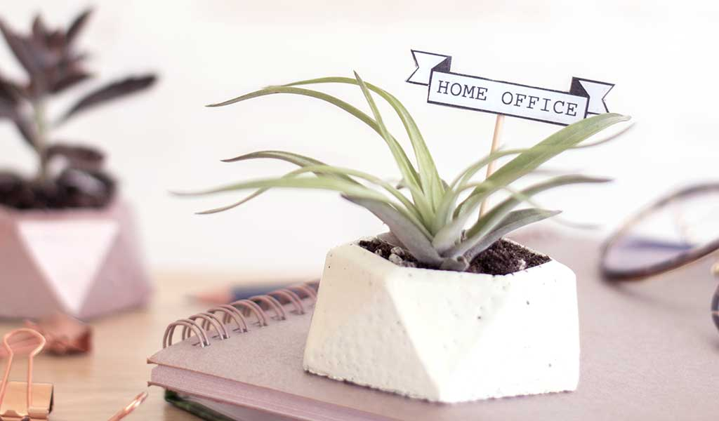 DIY Beton Blumentopf mit Sukkulente als Geschenke fürs Home-Office
